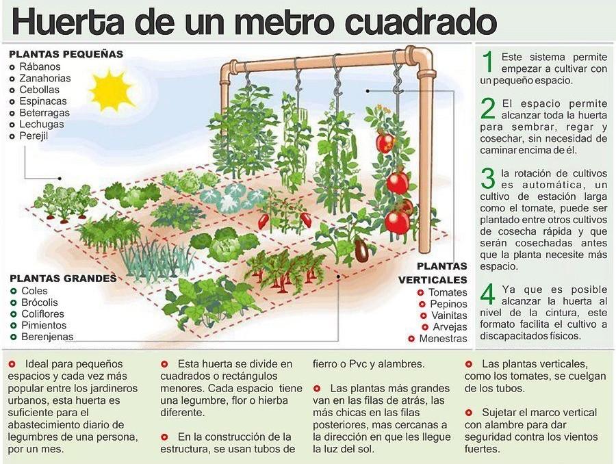 horta caseira