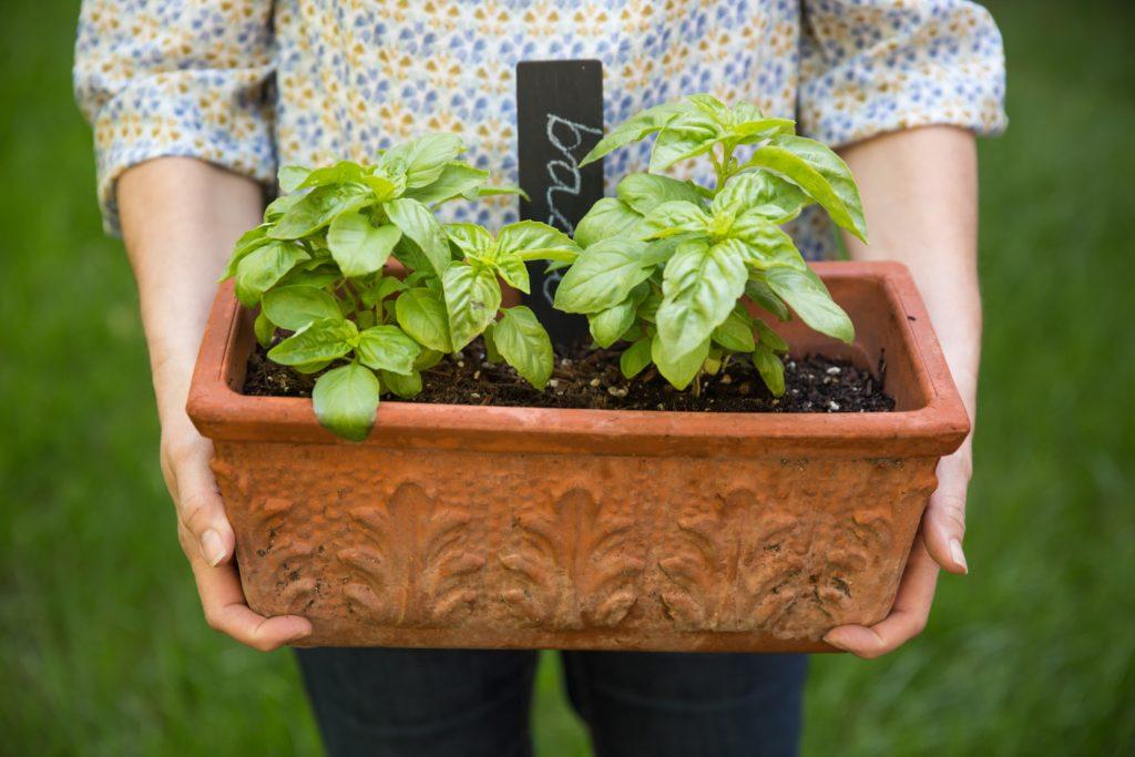 horta em casa vaso com plantas
