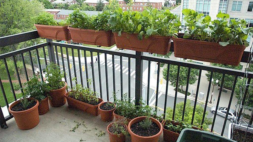 cropped horta em apartamento