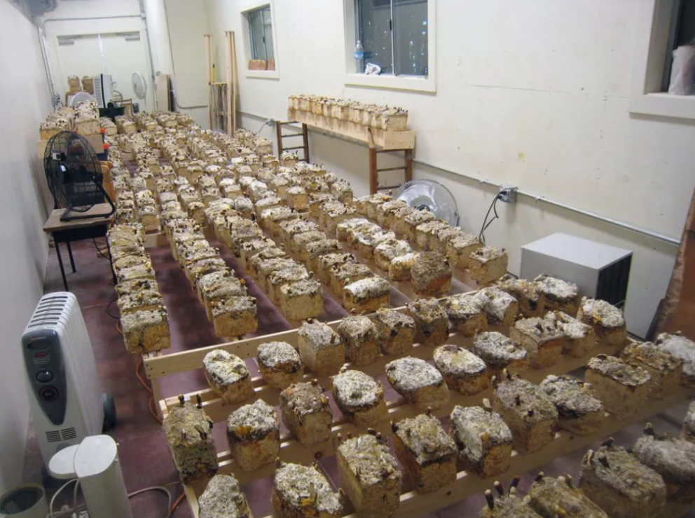 produção tijolos de cogumelos