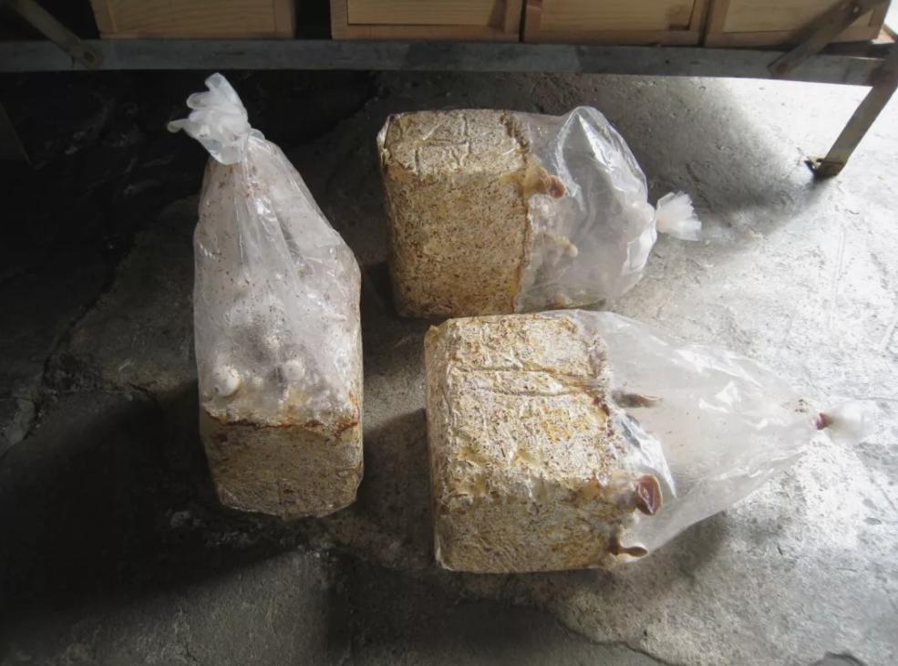 como são produzidos tijos de cogumelos