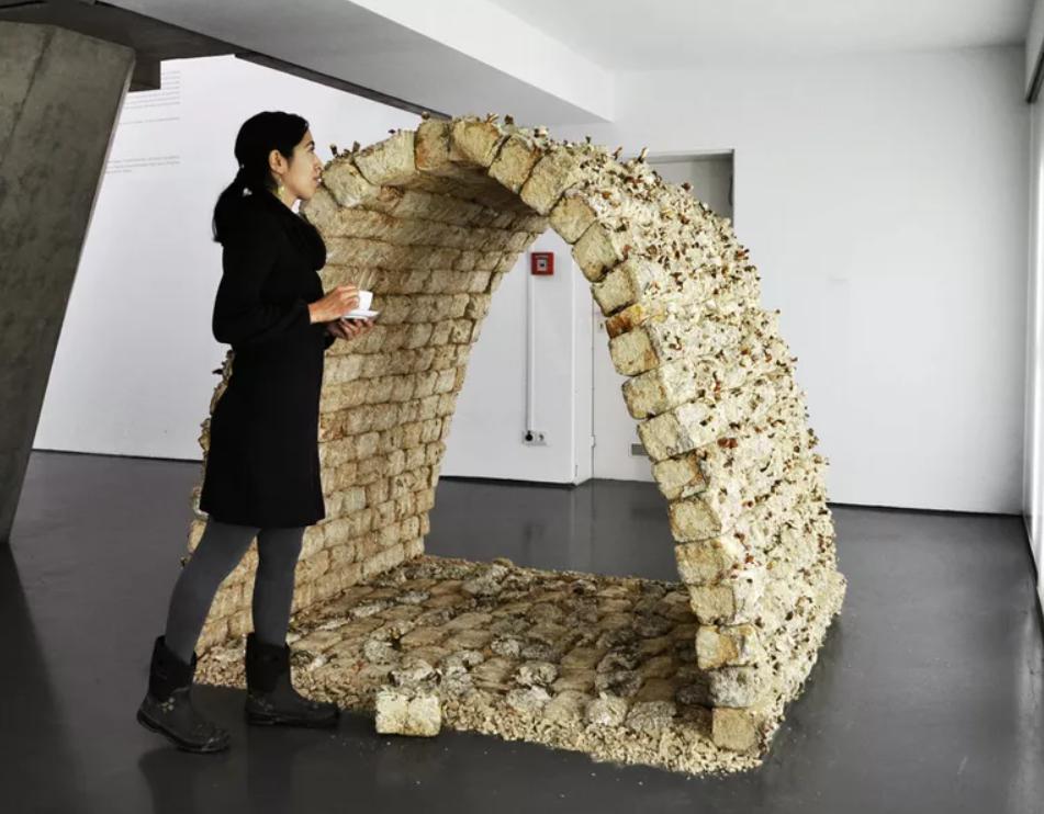 construção com cogumelos