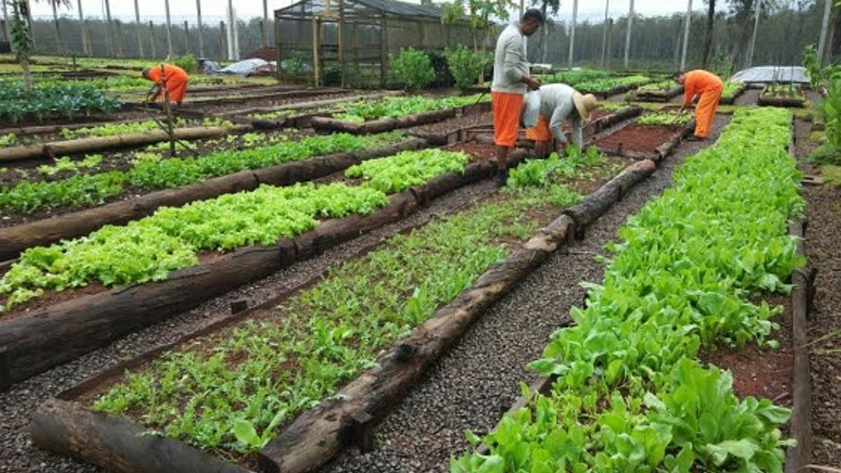 Presos do RS Cultivam Hortas Sustentáveis que Abastece Terceiro Setor