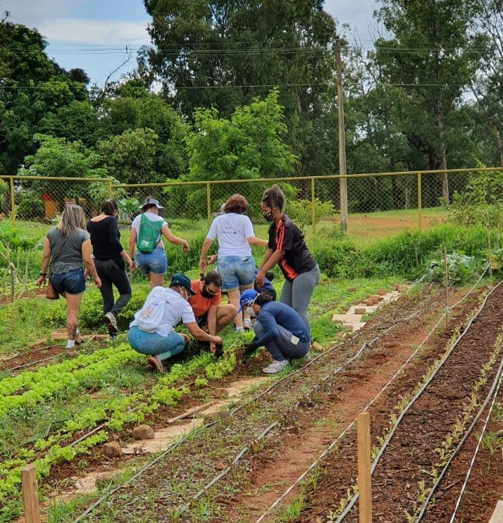 Horta comunitária é uma revitalização pública de um espaço abandonado. (Divulgação/Horta Comunitária do Guará)
