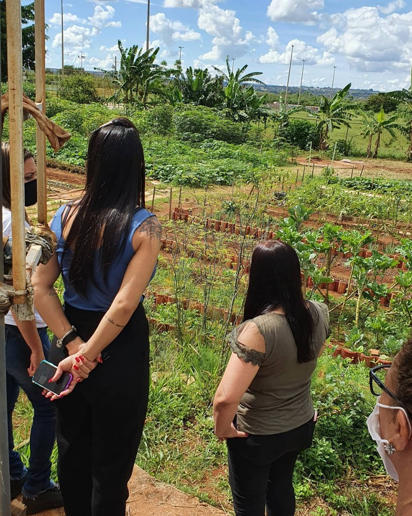 Iniciativa do plantio em hortas comunitárias promove o alívio de stress, bem-estar e segurança alimentar. (Divulgação/Horta Comunitária do Guará)