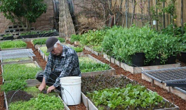 Local é modelo para como as cidades deveriam mudar e para o que as pessoas deveriam fazer em termos de horta em casa. (Divulgação/Urban Homestead)