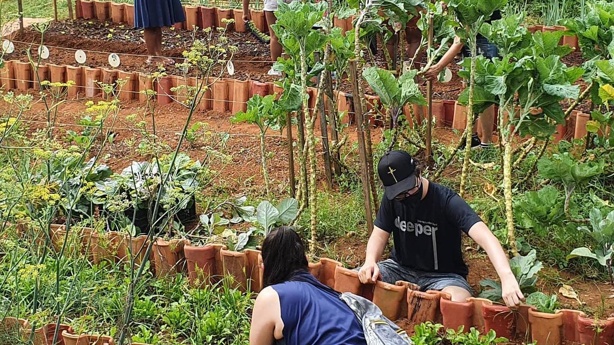 Horta Em Casa: Áreas Urbanas aumentam o número de Hortas Comunitárias e Fazendas Verticais