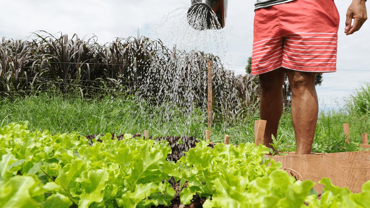 Horta Em Casa: Terreno Baldio no Distrito Federal vira Horta Comunitária